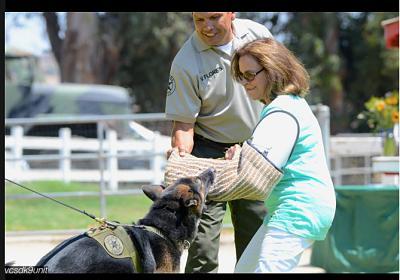 adopting-ex-police-military-dogs-screen-shot-2016-08-25-18.23.06.jpg