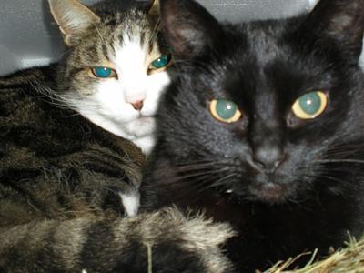 winter-care-cats-dscn2607-...-so-haben-2-platz.jpg