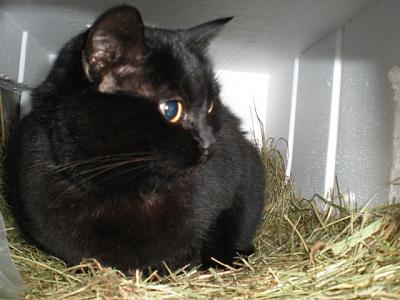 winter-care-cats-dscn2606-...schwarz-vorab...jpg