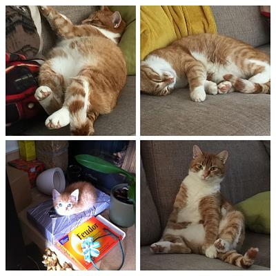 my-cat-adoption-story-a8afd36f-d4ab-4cbd-9765-74f5fb6ee8e6-collage.jpg
