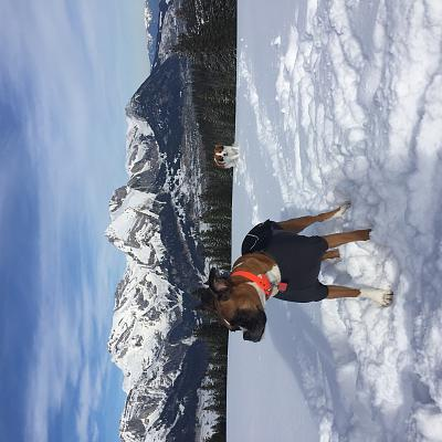 moving-switzerland-our-gorgeous-boxer-img_9004.jpg