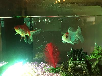 who-knows-about-goldfish-img_1107.jpg