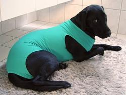 help-needed-re-dog-surgical-elizabethan-collar-u-bodysuit.jpg