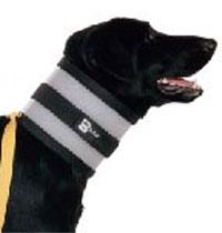 Distributor For Dog Collar