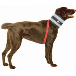 help-needed-re-dog-surgical-elizabethan-collar-no-bite-collar-2.jpg
