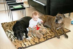 calling-all-staffie-lovers-staffordshire-bull-terrier-other-dogs-also-welcome-pictures-remey-clayton-197_smaller.jpg