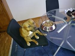 calling-all-staffie-lovers-staffordshire-bull-terrier-other-dogs-also-welcome-06032010016.jpg