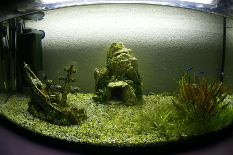 Keeping aquarium weed snail free english forum switzerland for How to keep fish tank clean without changing water