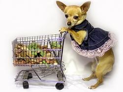 taking-dog-into-shop-okay-eccentric-frowned-upon-posh-dog-gifts-1.1-800x800.jpg