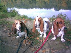 4th-dog-dogs-near-aare.jpg