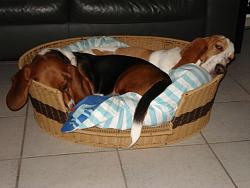 4th-dog-sharing-bed-001.jpg