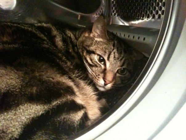 Cat with dandruff? - English Forum Switzerland