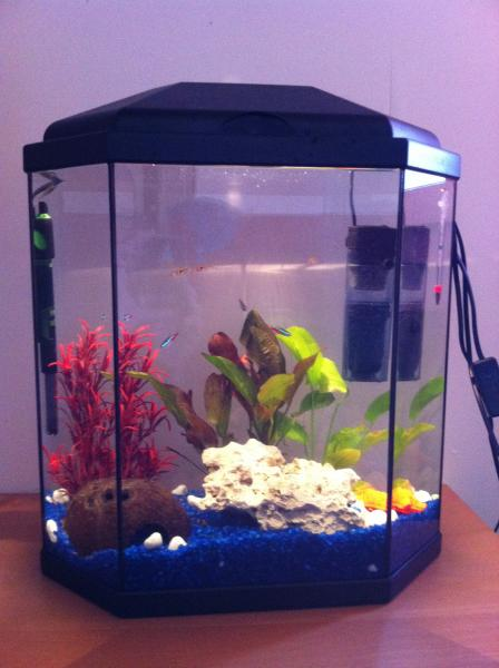 fish tank filter water noise my first aquarium filter