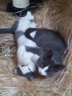 rescue-kitten-vet-bill-thor-loki.jpg