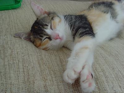 rescue-kitten-vet-bill-snv32992.jpg