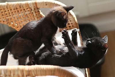 please-help-kittens-adopt-24.jpg