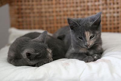 please-help-kittens-adopt-07.jpg