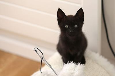 please-help-kittens-adopt-11.jpg