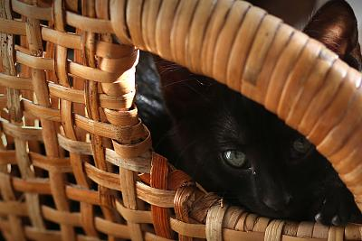 please-help-kittens-adopt-25.jpg