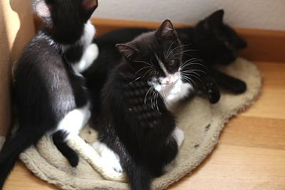 please-help-kittens-adopt-15.jpg