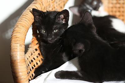 please-help-kittens-adopt-18.jpg