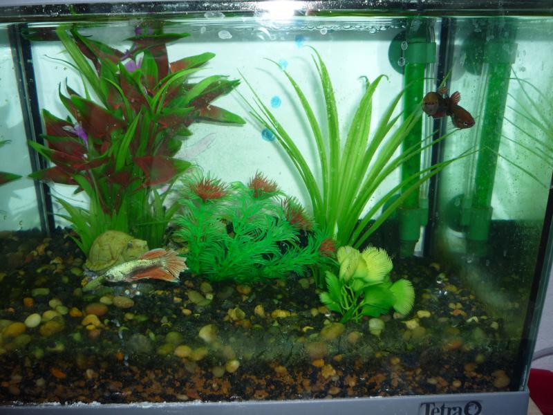 Algae problem in fish tank english forum switzerland for What causes algae in fish tanks