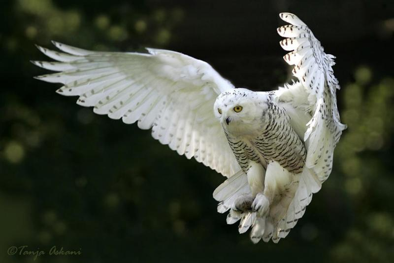 Most beautiful animal english forum switzerland most beautiful animal imageg voltagebd Image collections