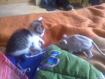 separating-kitten-mom-since-when-miu-e-topone.jpg