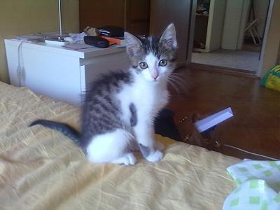 separating-kitten-mom-since-when-miu-letto.jpg