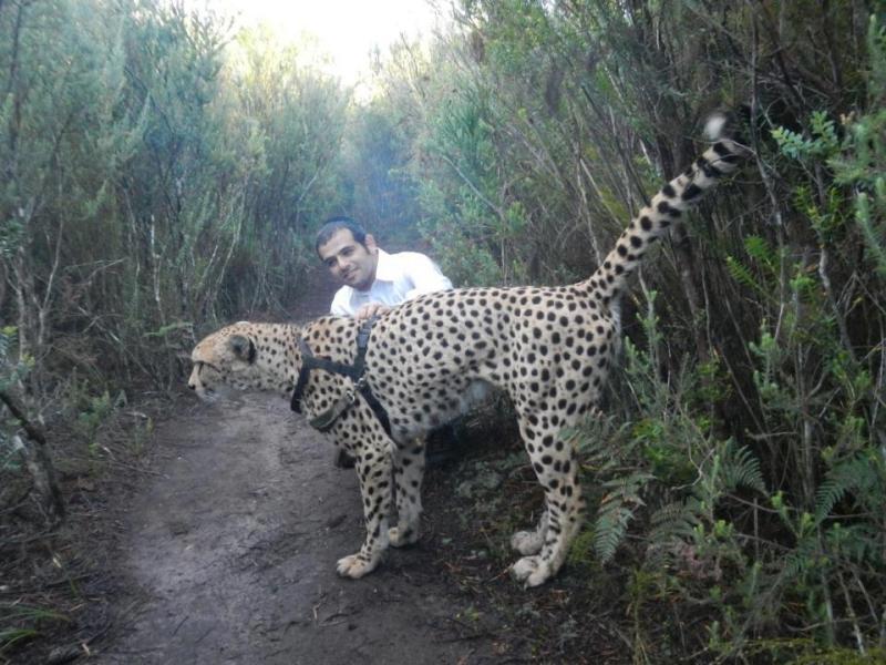 67801d1377427914 serval cheetah