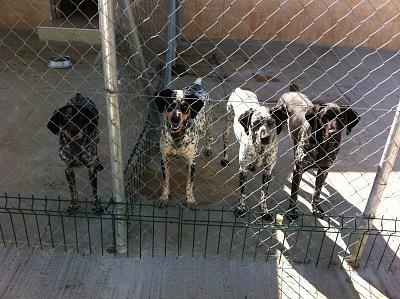 secret-life-dogs-img_0264.jpg