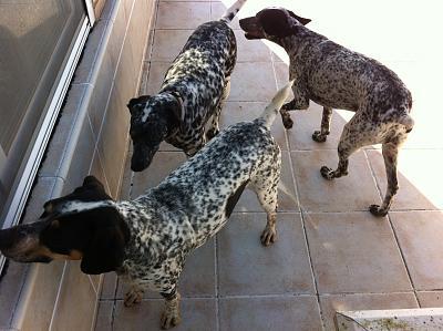 secret-life-dogs-img_0289.jpg