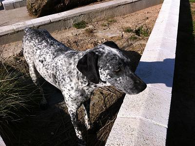 secret-life-dogs-img_0314.jpg