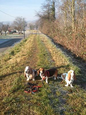 how-dog-friendly-zurich-2013-12-17-11.28.50.jpg