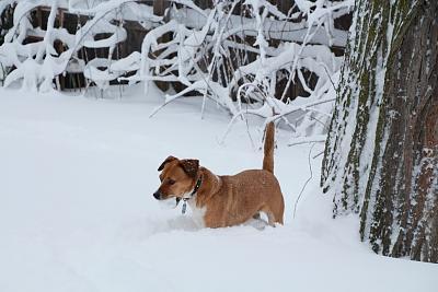 pet-sitting-network-snow.jpg