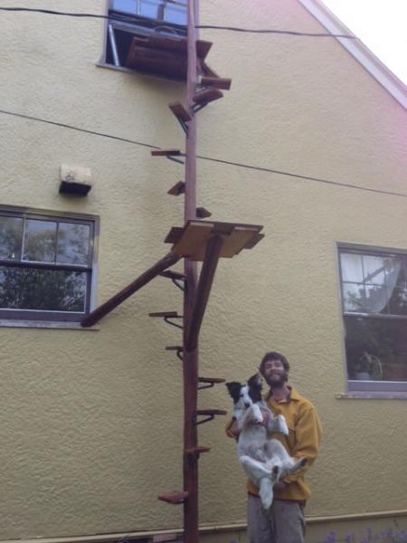 Where To Get Cat Ladders English Forum Switzerland