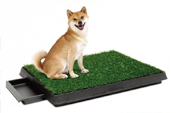 toilet for dog
