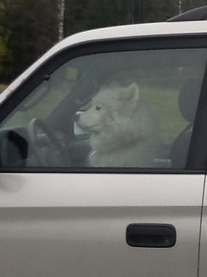 dogs-cars-image.jpg