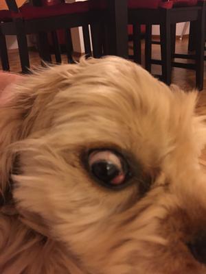 what-s-wrong-dogs-eye-eye.jpg