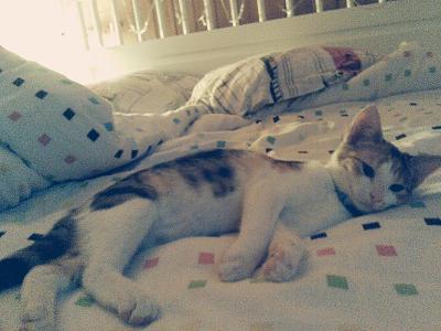looking-kitten-35d98iq.jpg