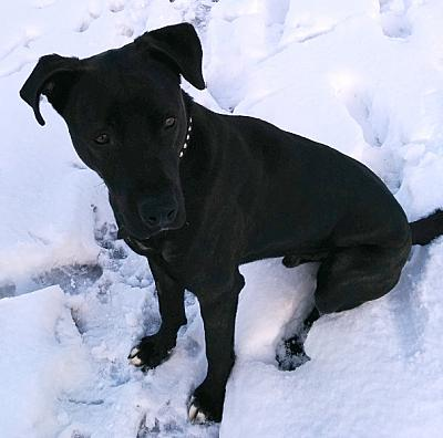 dog-school-trainer-near-w-denswil-negura-sitting-snow.jpg