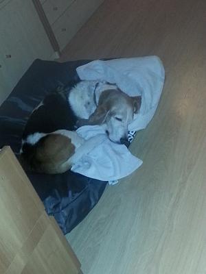 laundering-pet-bedding-shared-machine-phone-29.01-007.jpg