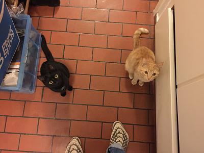 looking-long-term-cat-sitting-exchange-partner-around-zh-wipkingen-img_1108.jpg