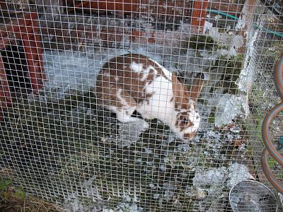 need-rabbit-advice-img_9014.jpg