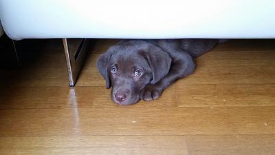 new-puppy-home-20150321_105358.jpg