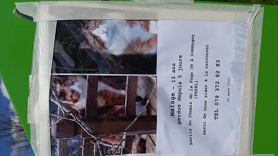 missing-kitty-poster-coppet-20150405_140608.jpg