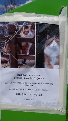 missing-kitty-poster-coppet-image.jpg