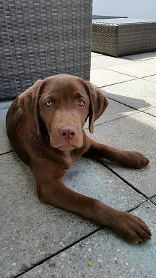 new-puppy-home-2015-05-12-15.18.18.jpg