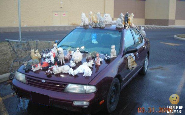 How To Keep Cats Off Your Car