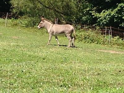 get-your-donkey-fix-here-img_0364.jpg